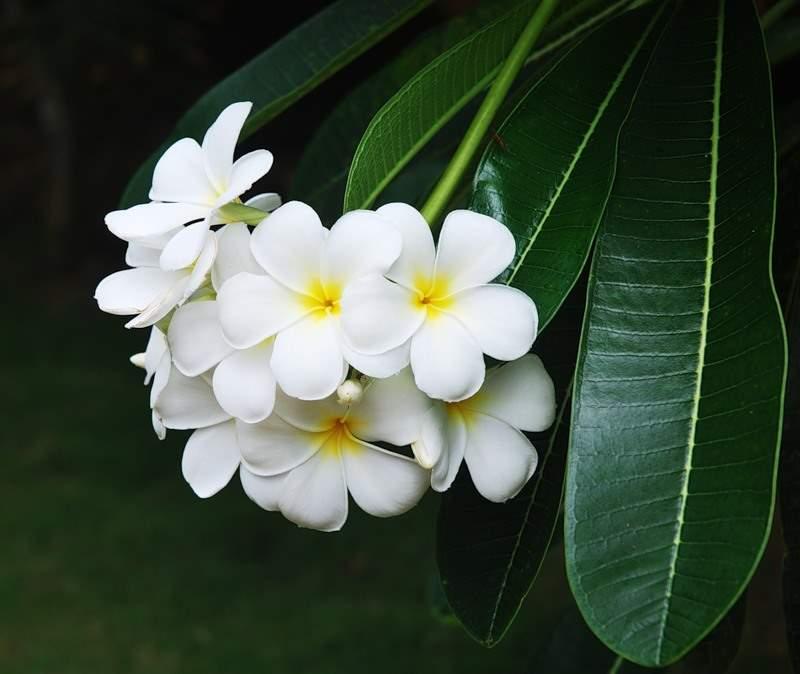title=цветы